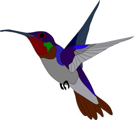 humming: vector - colibr� aisladas sobre fondo blanco Vectores