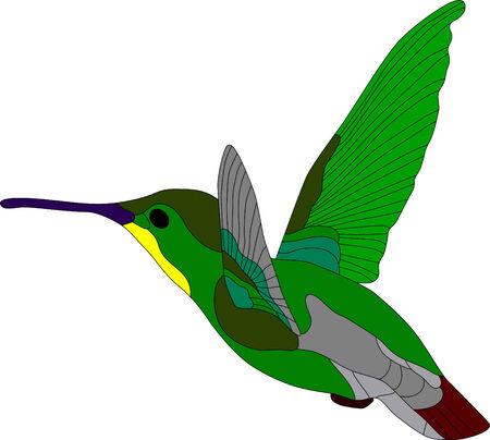 humming: vector - hummingbird isolated on white background Illustration