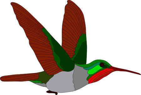 vector - hummingbird isolated on white background Ilustração