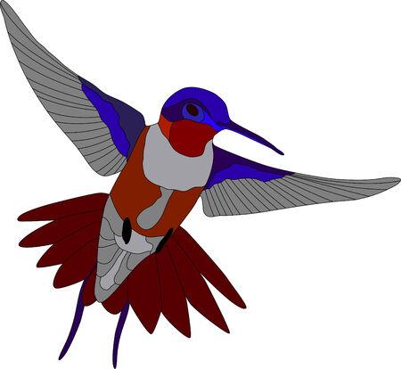 vector - hummingbird isolated on white background Illustration