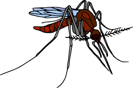 vector - colour mosquito  isolated on white background