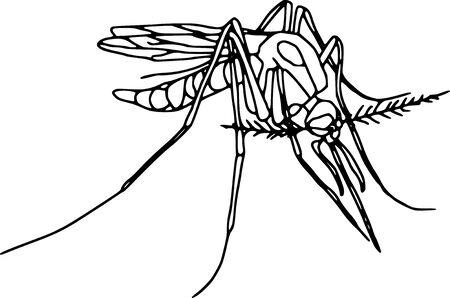 couleur de peau: vecteur - le moustique contour isol� sur fond blanc