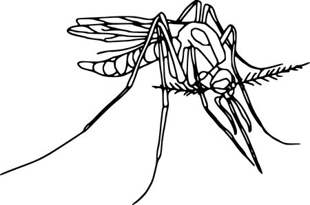 skin color: vector - contour mosquito  isolated on white background Illustration