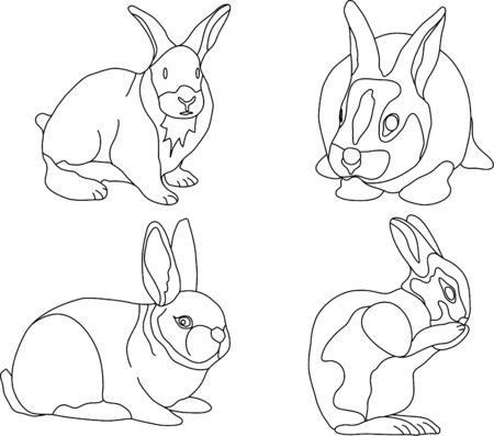 vector - rabbit isolated on white background