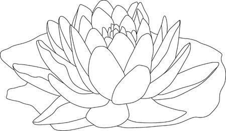 vector - contour waterlilly geïsoleerd op witte achtergrond