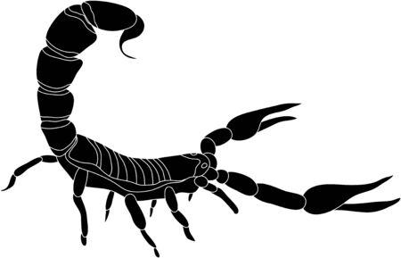 scorpion: vecteur - scorpion de couleur isol� sur fond blanc