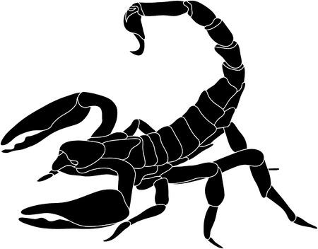 vector - kleur Schorpioen geïsoleerd op witte achtergrond  Stock Illustratie