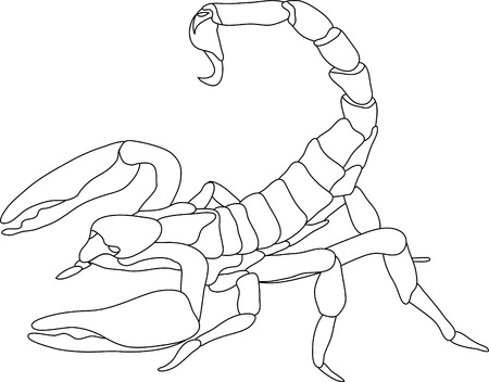 vector - contour scorpion isolated on white background Stock Vector - 4921062