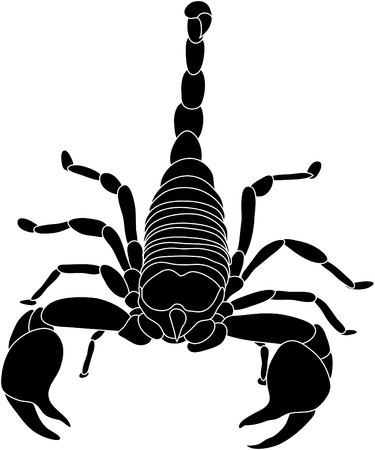 venom: vector - color scorpion isolated on white background Illustration