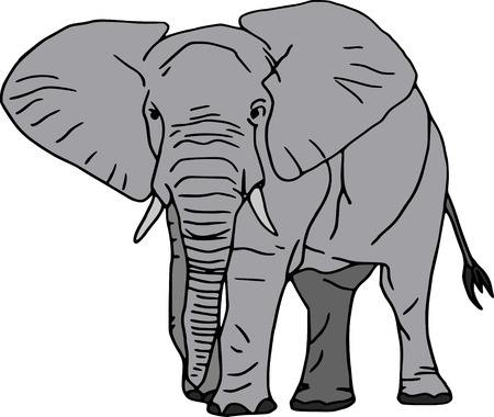 wrinkles: vector -  elephant isolated on white background Illustration