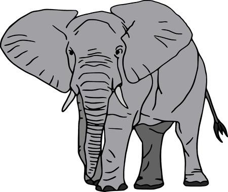 african grey: vector -  elephant isolated on white background Illustration