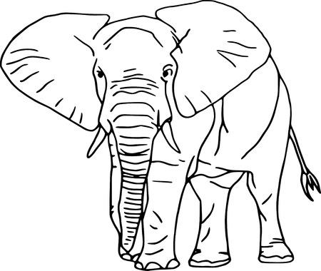 vector - contour elephant isolated on white background