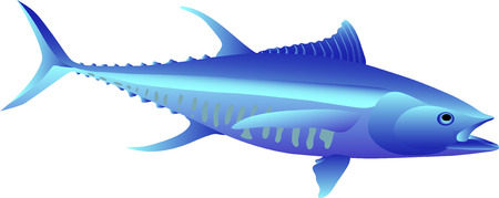vector - fish tuna isolated on background Illustration