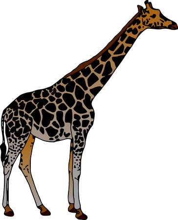 vector - giraffe isolated on white background Vector
