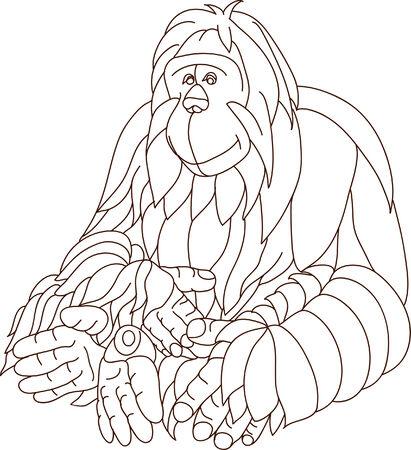 vector -  contour orangutan isolated on background Vector