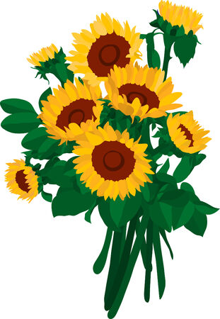 vector-the  bouquet of sunflowers Vector