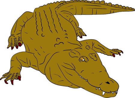 vector - crocodile isolated on background Stock Vector - 5458906