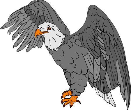 vector - bald eagle isolated on background Vector