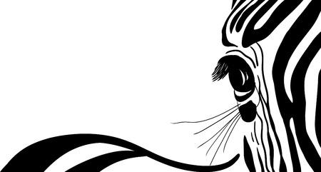 vector - zebra banner for yor text Illustration