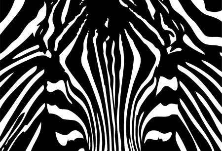vector - black and white zebra background Vector