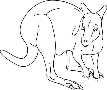 vector -  kangaroo isolated on background Vector