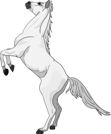 jump up: vector -horse standing on hind legs