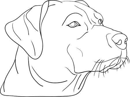 hounds: dog head isolated on background Illustration