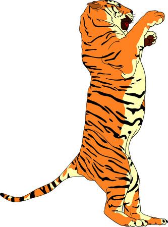 Tiger staande op achterste benen Stock Illustratie