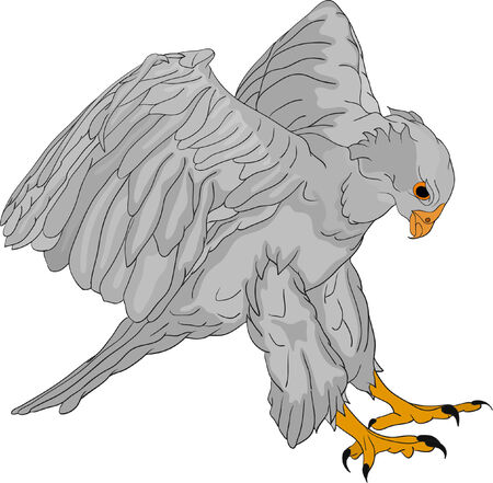 talons: vector - attacking hawk with large talons Illustration