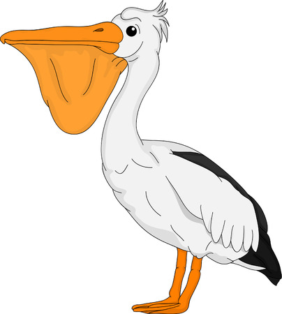 pelican: pelican bird isolated on background Illustration