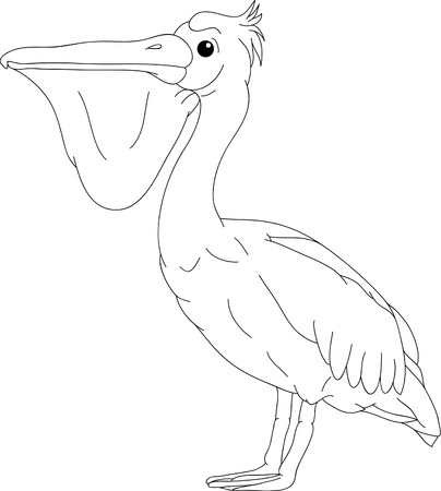 pelican bird isolated on background