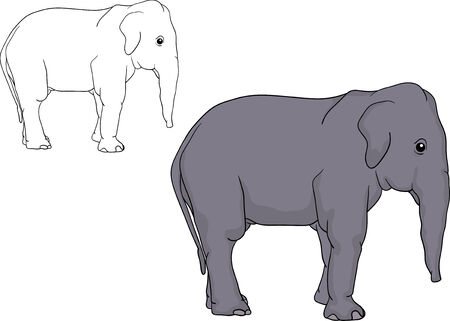 vector - a elephant puppy isolated on background Vector