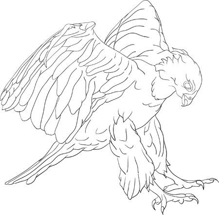 vector - aanvallen hawk met grote klauwen Stock Illustratie