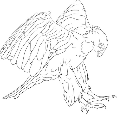 vector - attacking hawk with large talons Illustration