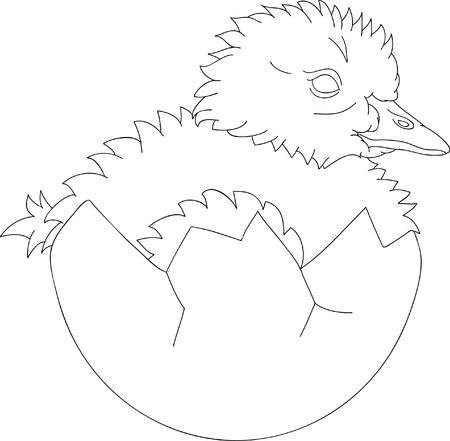 hatched: vector - newly hatched gosling in egg Illustration