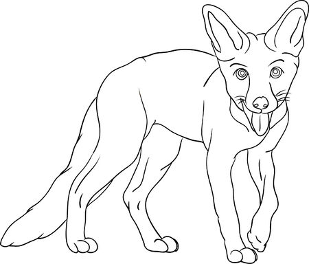 vector - fox isolated on background Vector