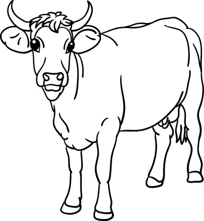 cow stood, the view from the front
