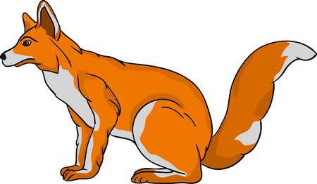 one animal:  fox isolated on background