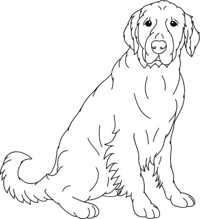 labrador retriever: Labrador retriever contour isolated on background