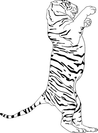 panthera: Tiger  standing on hind legs Illustration