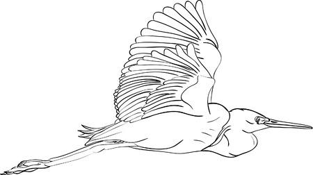 herons: great egret  isolated on background Illustration