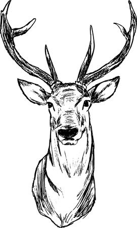 head silhouette: Deer - hand draw , isolated on background