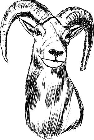 goat head: hand draw mouflon , portrait, isolated on background Illustration