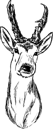 roe deer: roe-deer hand draw portrait, isolated on background