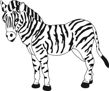 dessin au trait: vecteur - zebra debout isol� sur fond  Illustration