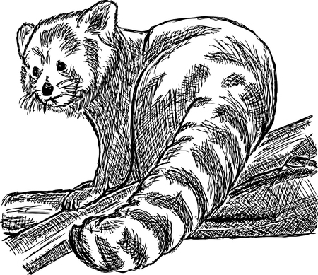 outline red: hand draw red panda sitting on a branch
