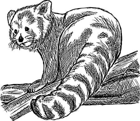 extinction: main dessiner panda rouge assis sur une branche Illustration