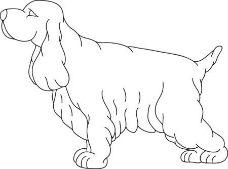 cocker:   ein Cocker-Spaniel, isoliert auf Hintergrund Illustration
