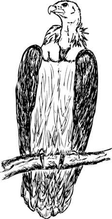 griffon:  large griffon - vulture  sitting on a branch Illustration