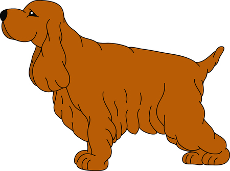 vector -  a Cocker Spaniel isolated on background Vector